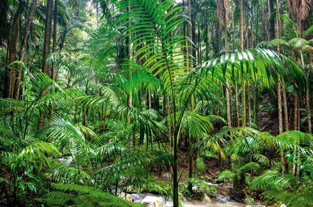 One of the Local Attractions - Rainforests and national parks near Amore BandB accommodation in Mt Tamborine.