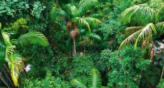 View of the rainforest on Tamborine Mountain