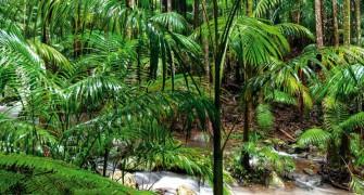 Best Tamborine Mountain Walks