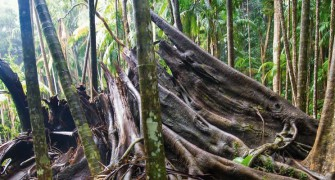The rainforest in Tamborine Mountain is always changing and redeveloping