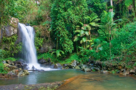 Events - What's On why not walk to a waterfall, just 15 minutes from your Tamborine accommodation.