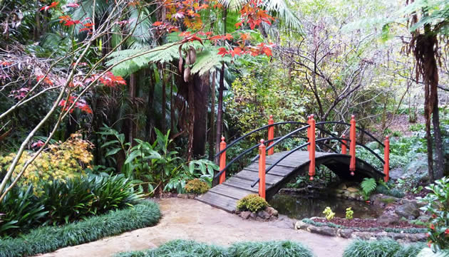 Tamborine Mountain Botanic Gardens has local native species as well as plants from around the world. Some can walk here, others take the 5 minute drive from their accommodation.
