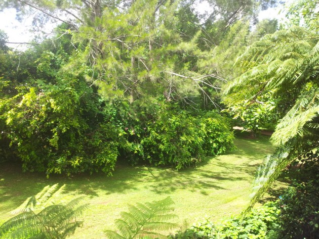Tamborine mountain accommodation - views over gardens