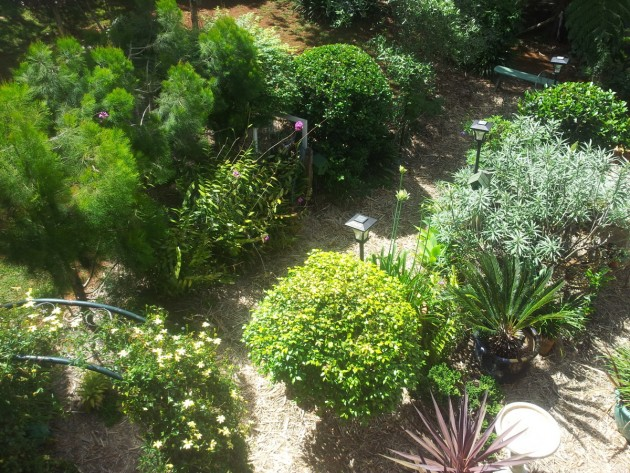Ornamental gardens from the window of your accommodation in Mt Tambourine.