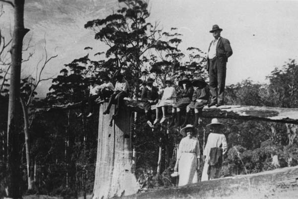 Early timber industry of Mt Tamborine
