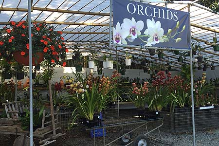 Orchids at Tamborine Mountain Nursery - 5 minutes walking from your accommodation in Tamborine Mountain