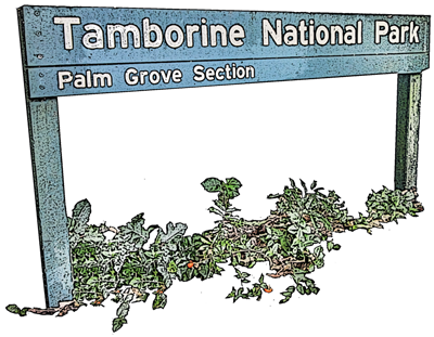Palm Grove National Park is an easy walk from your Mt Tamborine accommodation - Amore B&B
