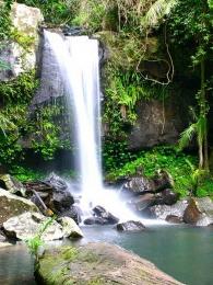 Curtis Falls near Amore BnB in Mt Tamborine
