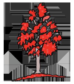 Flame tree illustration from Tamborine National Park