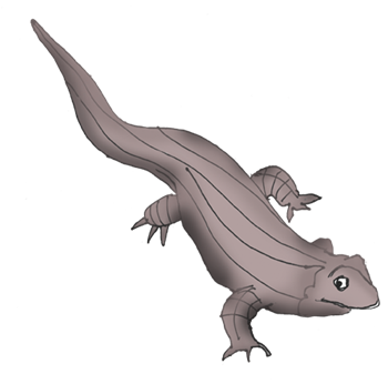 Illustration of a land mullet. A type of large lizard found in Joalah National Park near Amore B&B Mt Tamborine