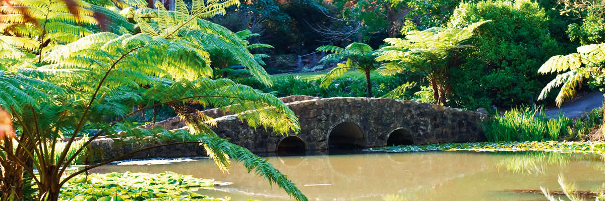 Tamborine Mountain's Botanic Gardens is a perfect wedding venue