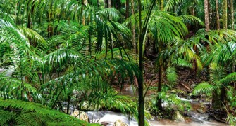 Best Tamborine Mountain Walks